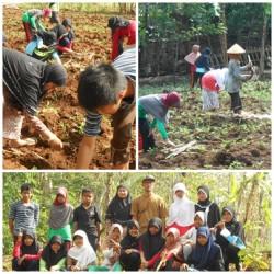 Bersama dengan pengasuh, anak asuh menanam tebu